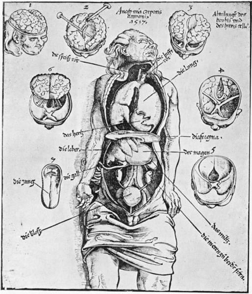 Anatomia Corporis Humani Art Print