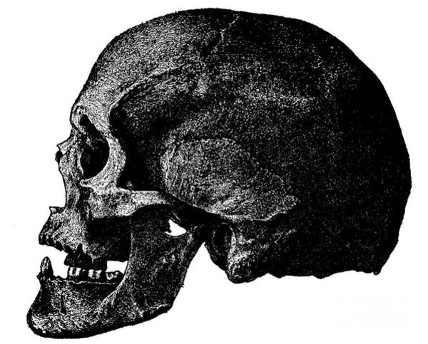 Wall Art - Drawing - Anatomical Drawing Of A Human Skull by European School