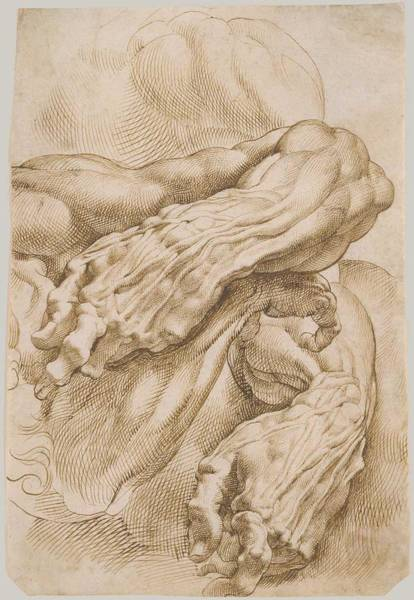 Wall Art - Painting - Anatomical Studies,  A Left Forearm In Two Positions And A Right Forearm,  Peter Paul Rubens by Celestial Images
