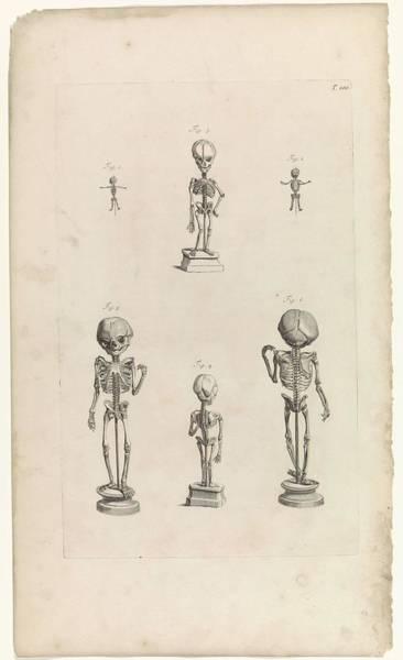 Liver Painting - Anatomical Studies Of The Skeletons Of Fetuses, Pieter Van Gunst, After Gerard De Lairesse, 1685 by Gerard de Lairesse