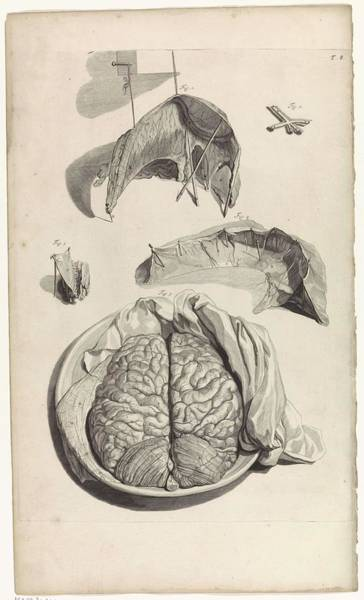 Liver Painting - Anatomical Study Of A Part Of The Skull And Brain, Pieter Van Gunst, After Gerard De Lairesse, 1685 by Gerard de Lairesse
