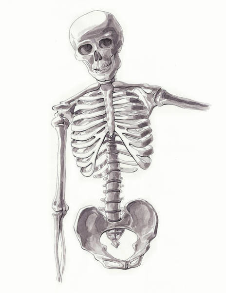Painting - Anatomical Study Of Skeleton by Irina Sztukowski
