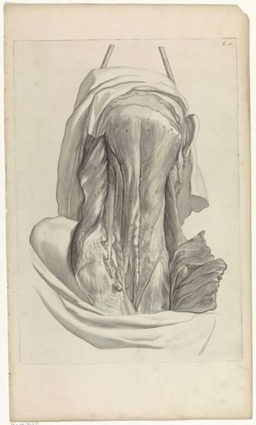 Liver Painting - Anatomical Study Of The Back Of The Head, Pieter Van Gunst, After Gerard De Lairesse, 1685 by Gerard de Lairesse