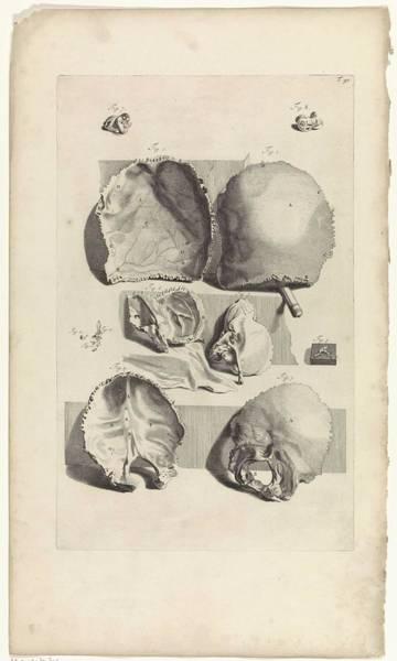 Liver Painting - Anatomical Study Of The Backsheet Of A Skull, Pieter Van Gunst, After Gerard De Lairesse, 1685 by Gerard de Lairesse