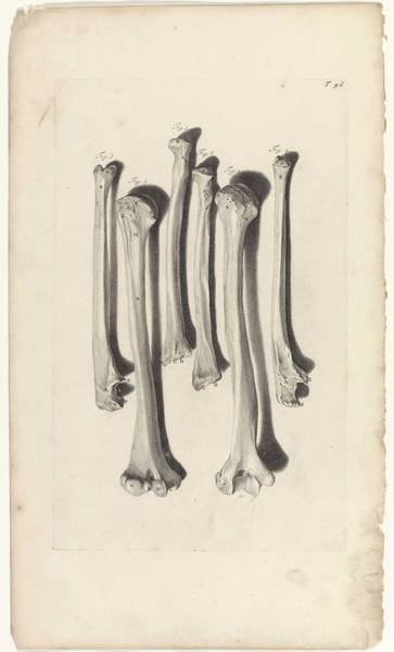 Liver Painting - Anatomical Study Of The Bones Of The Arm, Pieter Van Gunst, After Gerard De Lairesse, 1685 by Gerard de Lairesse