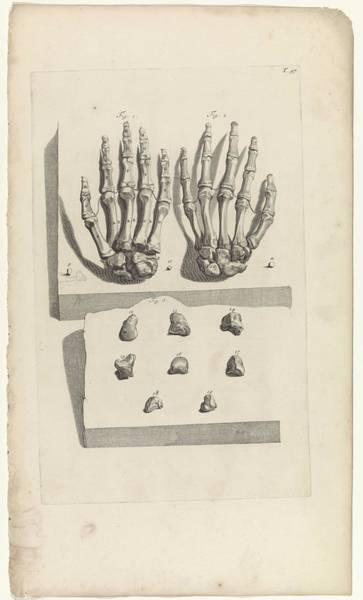 Liver Painting - Anatomical Study Of The Bones Of The Hands, Pieter Van Gunst, After Gerard De Lairesse, 1685 by Gerard de Lairesse