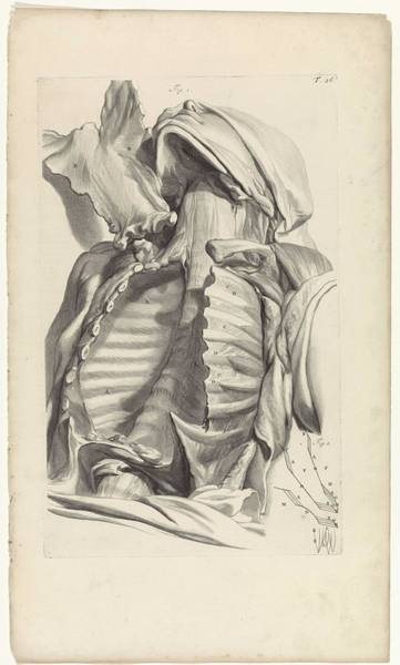 Liver Painting - Anatomical Study Of The Empty Chest, Pieter Van Gunst, After Gerard De Lairesse, 1685 by Gerard de Lairesse