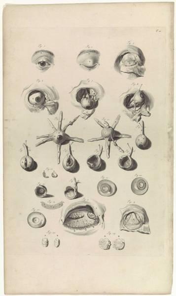 Liver Painting - Anatomical Study Of The Eye, Pieter Van Gunst, After Gerard De Lairesse, 1685 by Gerard de Lairesse