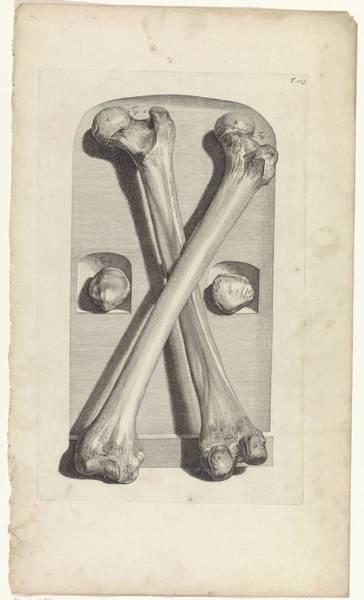 Liver Painting - Anatomical Study Of The Femur, Pieter Van Gunst, After Gerard De Lairesse, 1685 by Gerard de Lairesse