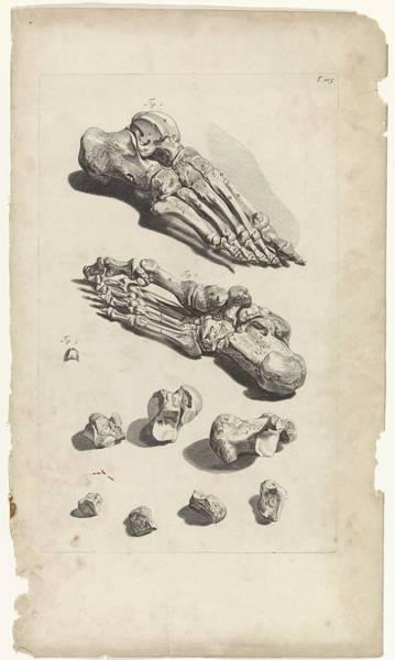 Liver Painting - Anatomical Study Of The Foot Bones, Pieter Van Gunst, After Gerard De Lairesse, 1685 by Gerard de Lairesse