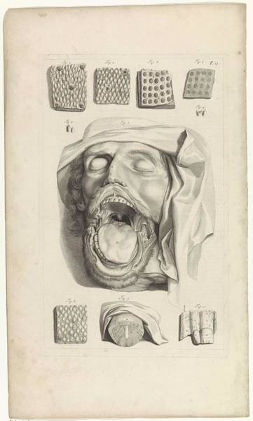 Liver Painting - Anatomical Study Of The Head, Nose And Tongue, Pieter Van Gunst, After Gerard De Lairesse, 1685 by Gerard de Lairesse