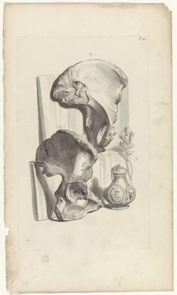 Liver Painting - Anatomical Study Of The Hip, Pieter Van Gunst, After Gerard De Lairesse, 1685 by Gerard de Lairesse