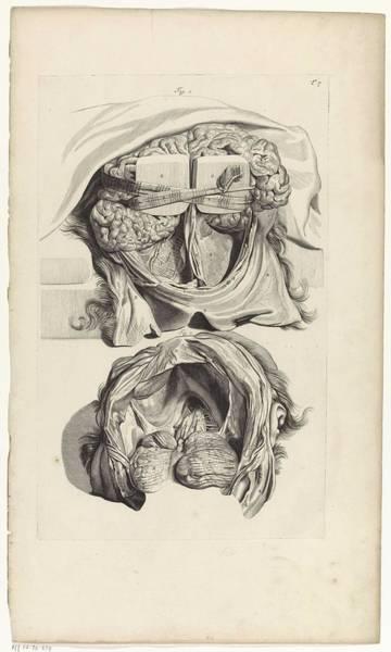Liver Painting - Anatomical Study Of The Inside Of A Skull, Pieter Van Gunst, After Gerard De Lairesse, 1685 by Gerard de Lairesse
