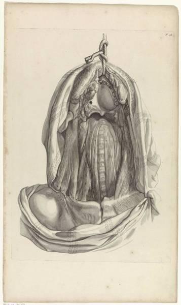 Liver Painting - Anatomical Study Of The Inside Of The Head, Pieter Van Gunst, After Gerard De Lairesse, 1685 by Gerard de Lairesse