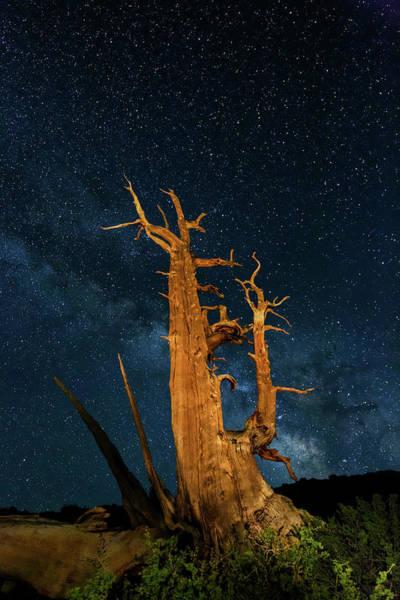 Wall Art - Photograph - Ancient Bristlecone Pine Tree And Stars by Adam Jones