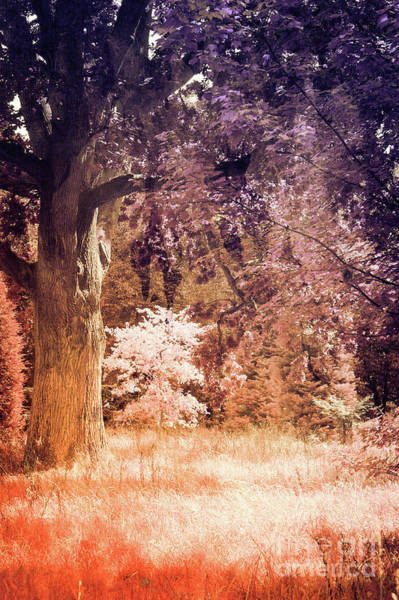 Wall Art - Photograph - Ancient British Woodland by Tom Gowanlock