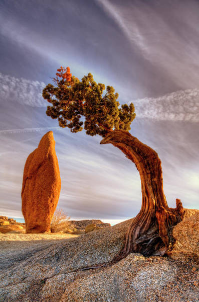 Wall Art - Photograph - Ancient Cedar Tree Over Balanced Rock by Bill Wight