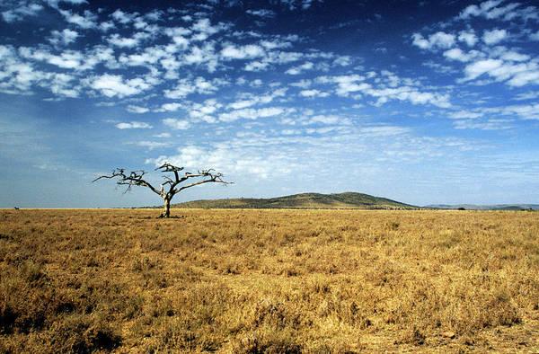 Wall Art - Photograph - Ancient Dead Tree On The Serengeti Plain by David Cayless