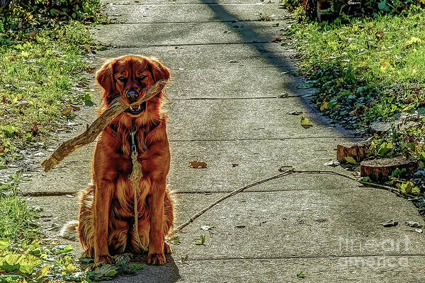 Greeters Photograph - And Carry A Big Stick by Gary Holmes