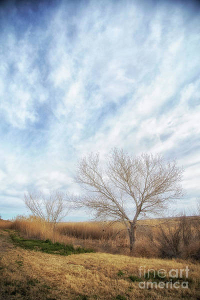 Photograph - And The Wind Began To Blow by Natural Abstract Photography
