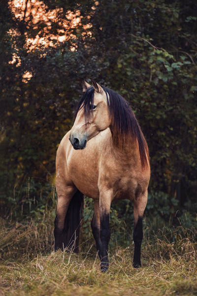 Wall Art - Photograph - Andalusian Horse Mare Equus Stands On The Meadow Switzerland by imageBROKER - Stephanie Hafner