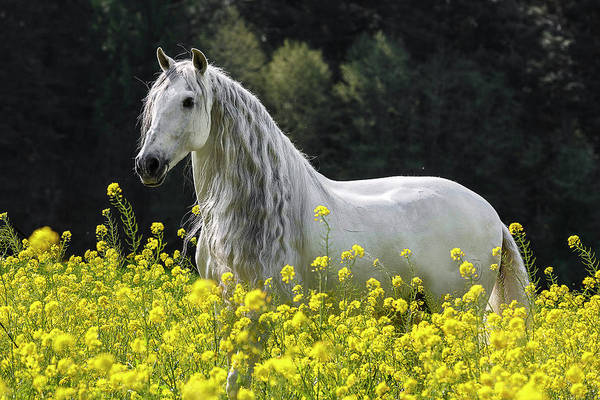 Photograph - Andalusian In Yellow by Wes and Dotty Weber