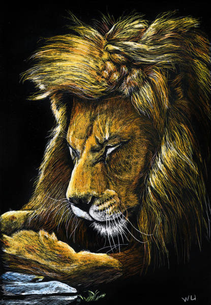 Drawing - Androcles' Lion by William Underwood