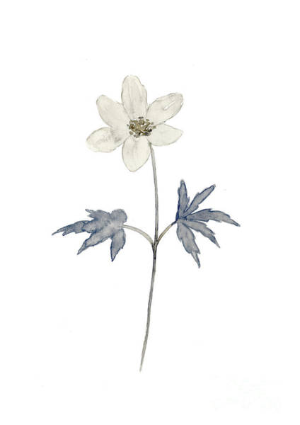 Wall Art - Painting - Anemone Bluish Grey Forest Flowers Watercolor Poster by Joanna Szmerdt