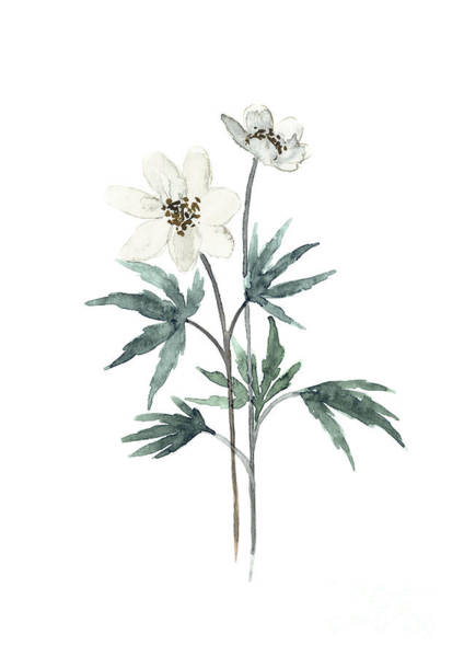 Wall Art - Painting - Anemone White Cream Floral Bouquet by Joanna Szmerdt