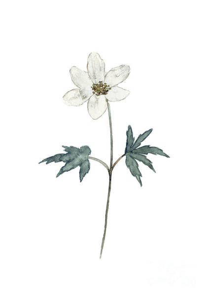 Wall Art - Painting - Anemone White Cream Flower Watercolor Painting by Joanna Szmerdt