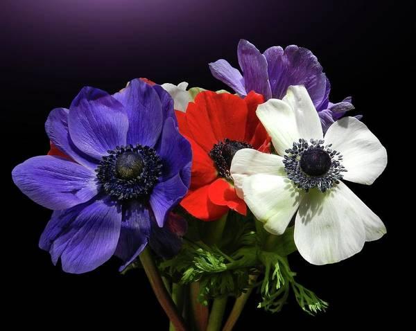 Photograph - Anemonen Bouquet by Gitpix