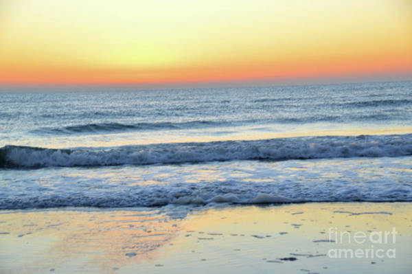 Wall Art - Photograph - Anew by Robyn King