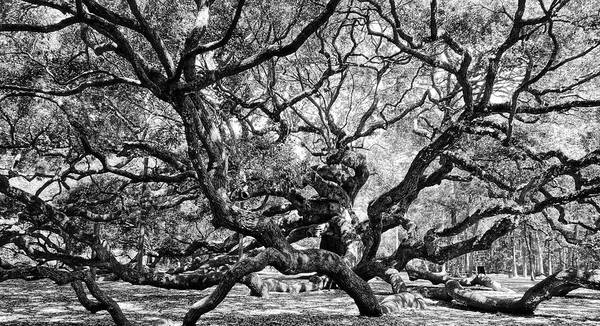 Photograph - Angel Oak Black And White by Dan Sproul