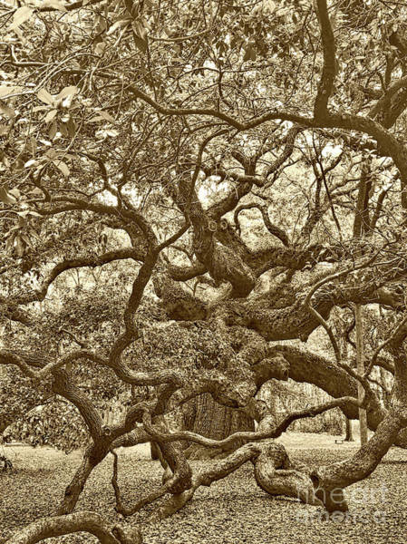 Photograph - Angel Oak Drama In Vintage Sepia by Carol Groenen