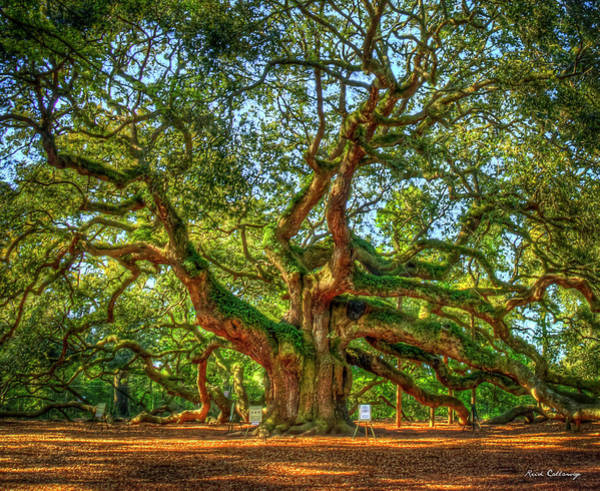Photograph - Angel Oak Morning Shadows 2 Johns Island Landscape Charleston South Carolina Art by Reid Callaway