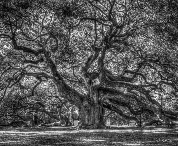Photograph - Angel Oak Morning Shadows B W Johns Island Landscape Charleston South Carolina Art by Reid Callaway