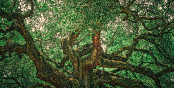 Photograph - Angel Oak Panorama by Dan Sproul