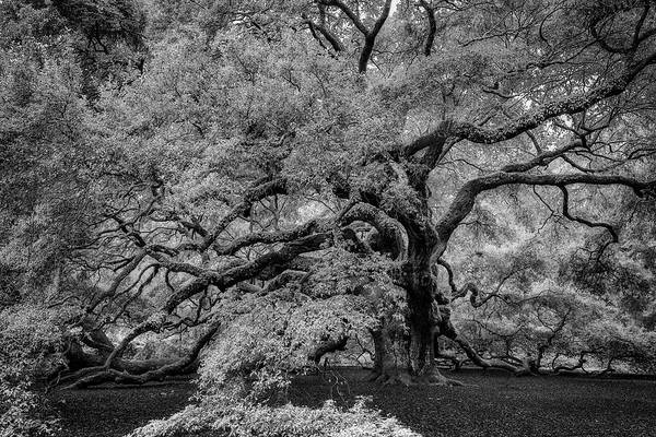 Wall Art - Photograph - Angel Oak Tree Black And White by Rick Berk