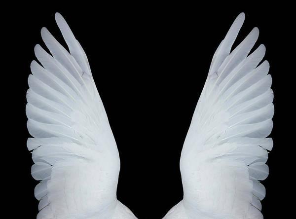 Angel Of Peace Photograph - Angel Wings, Xxxl by Seraficus