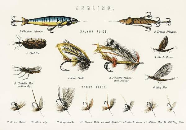 Wall Art - Painting - Angling Baits From British Fresh Water Fishes  1879  by Celestial Images