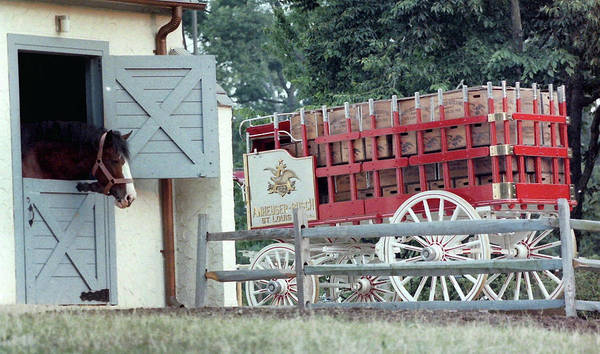 Wall Art - Photograph - Anheuser Busch Beer Wagon by Mike Martin