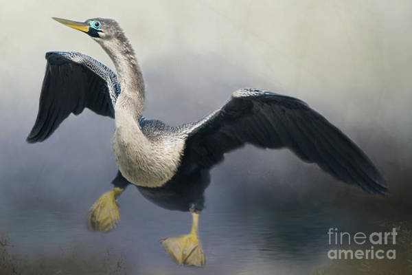 Photograph - Anhinga by Ed Taylor