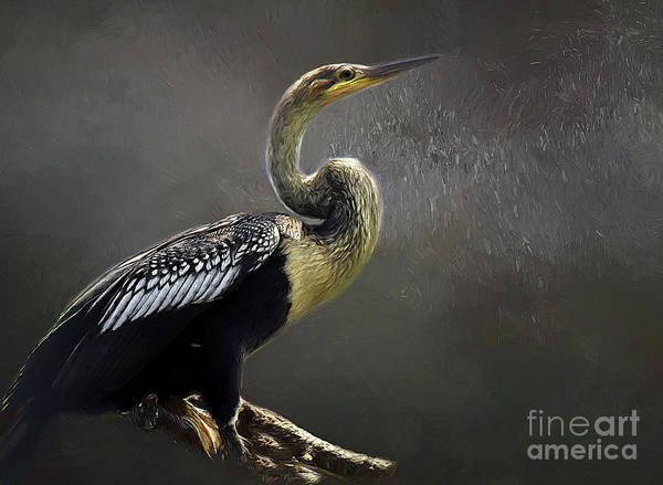 Wall Art - Photograph - Anhinga Painting by Darren Fisher