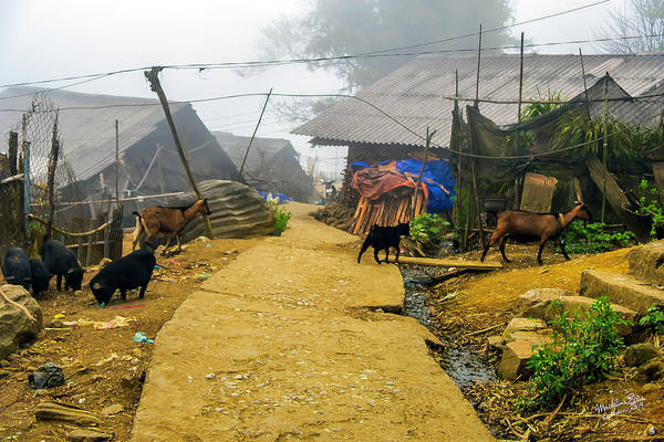 Wall Art - Photograph - Animal Farm In Sapa, Vietnam by Madeline Ellis