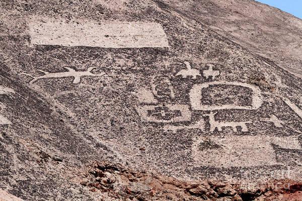 Photograph - Animal Figures Cerro Pintados Geoglyphs Chile by James Brunker