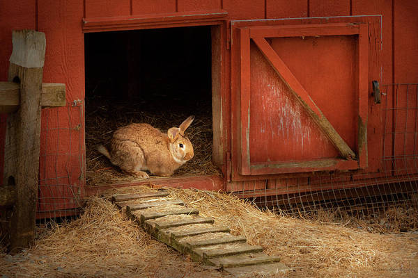 Photograph - Animal - Rabbit - Making Eggs For Easter by Mike Savad