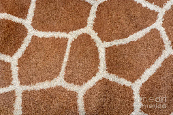 Wall Art - Photograph - Animal Skin Background Of The Patterned by David Carillet