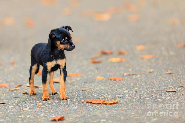 Wall Art - Photograph - Animals Homeless. Little Dog Cute Puppy by Voyagerix