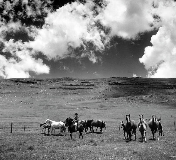 White Horse Photograph - Animals Horses by Margaret Bourke-white