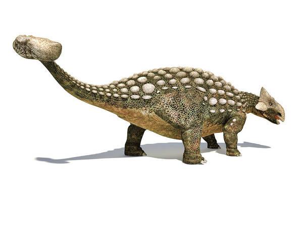 Wall Art - Photograph - Ankylosaurus Dinosaur Isolated On White by Leonello Calvetti